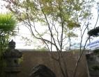 モミジを見上げる 和風坪庭 岩国市